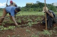 Cuba - Farming